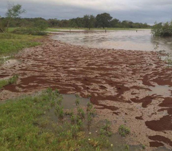 Еще одно неприятное последствие урагана «Харви» (4 фото)