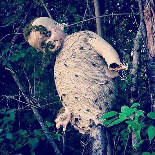 Ужасы природы (31 фото)