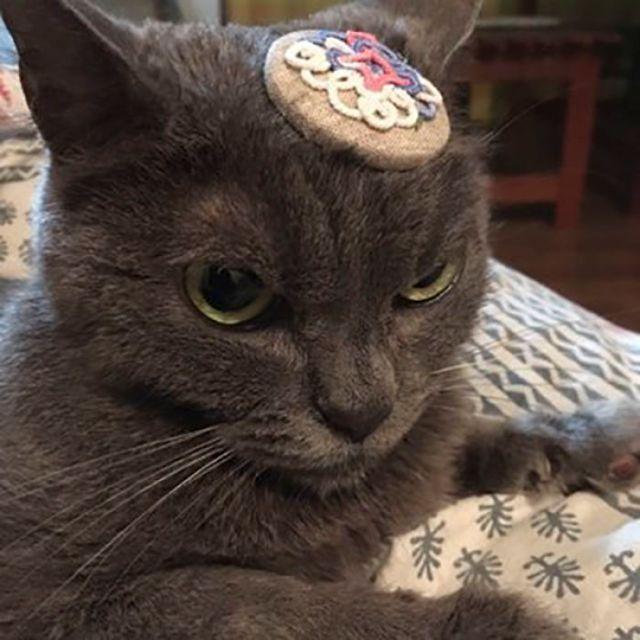 Недовольная кошка по кличке Шамо (10 фото)