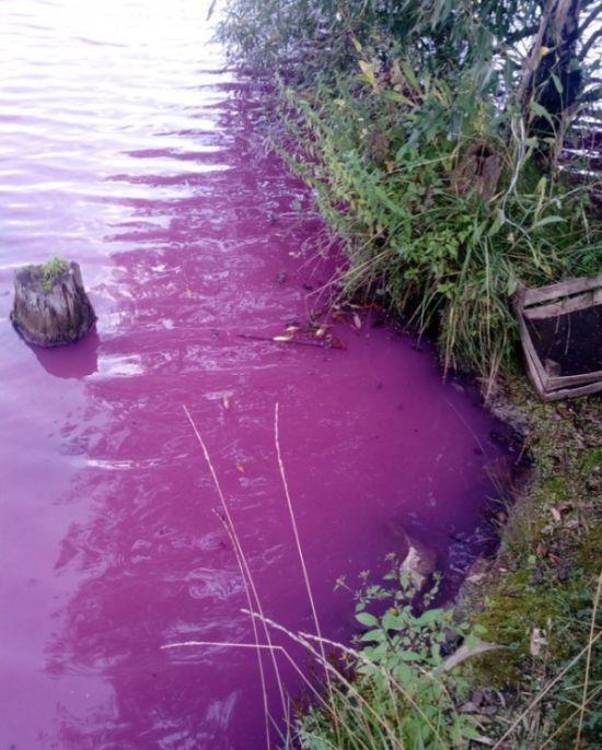 В Тульской области Товарковское водохранилище стало цветным (3 фото)