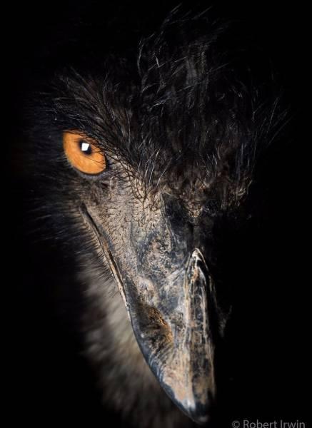 Фото дикой природы сына Стива Ирвина Роберта (39 фото)