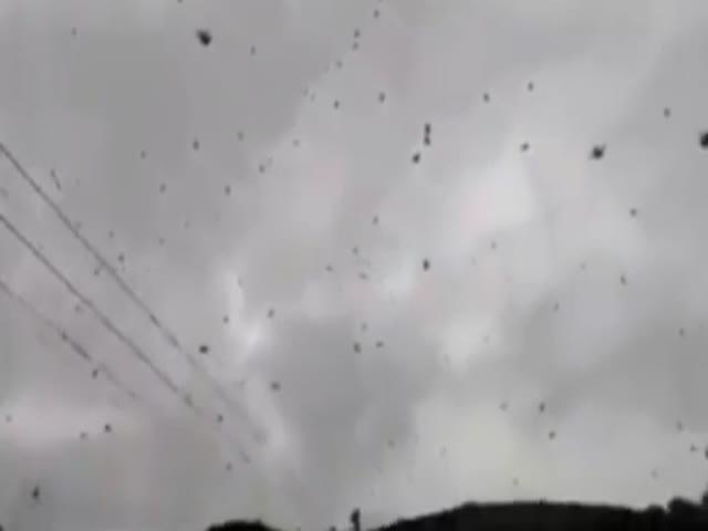Сотни «парящих» пауков