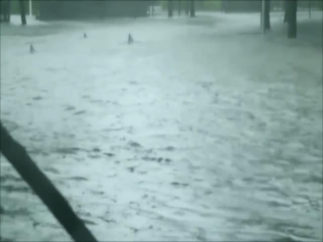 Шокирующие видео из затопленного Майами
