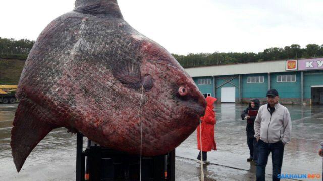 Рыбаки поймали огромную рыбу, но их радость длилась недолго (2 фото)