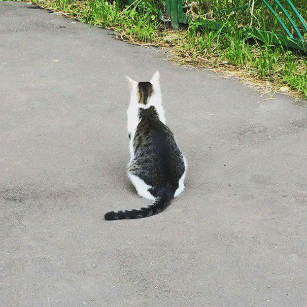 Коты необычного окраса (25 фото)