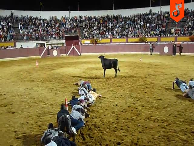 Интересный конкурс с быком