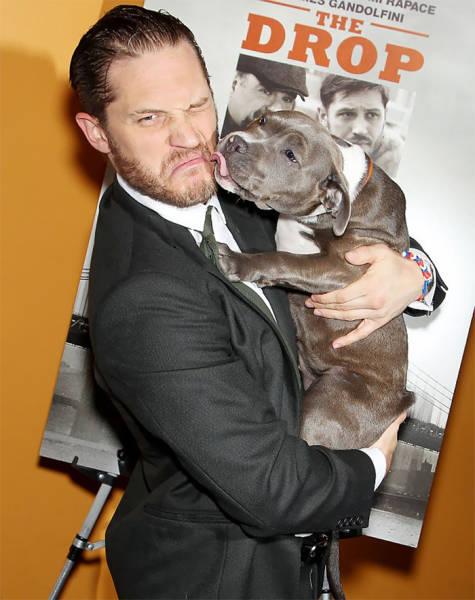 Том Харди очень любит собак (31 фото)