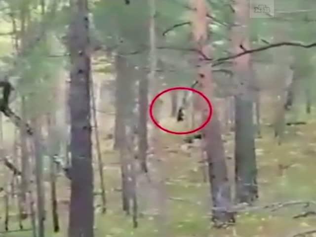 Медведь загнал парня на верхушку дерева