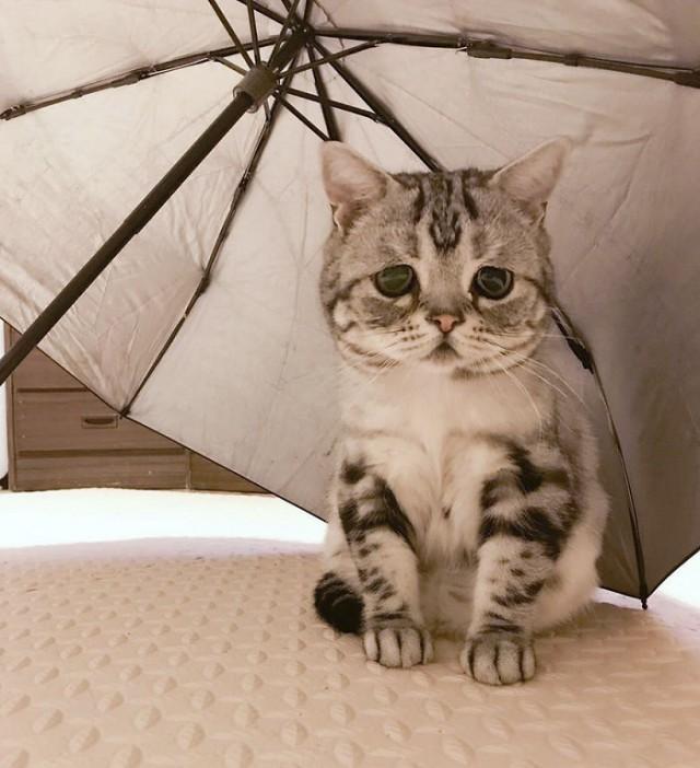 Луху - самая грустная кошка в мире (15 фото)