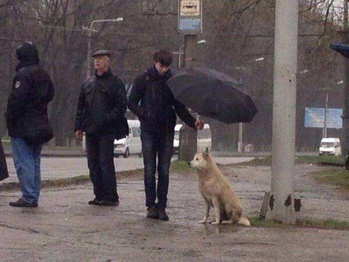 http://cdn.trinixy.ru/pics5/20170922/housand_words_02.jpg