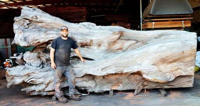 Gigantiškas aštuonkojis, padarytas iš ištisinio medžio kamieno (9 foto)