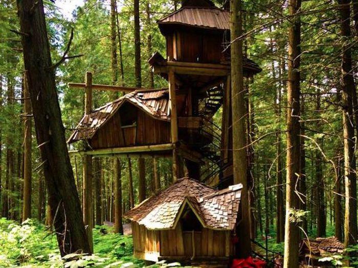 Комфортабельные дома на деревьях (35 фото)