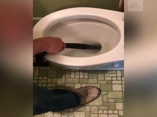 Американец голыми руками достал змею из унитаза