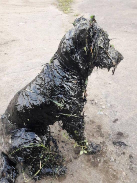 Спасение собаки (6 фото)