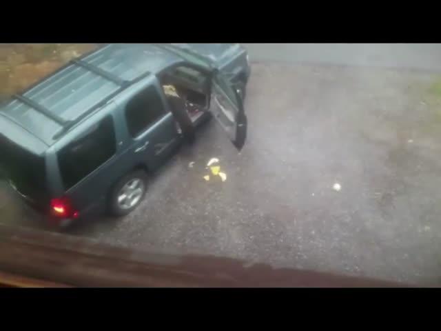 Медведи застряли в машине