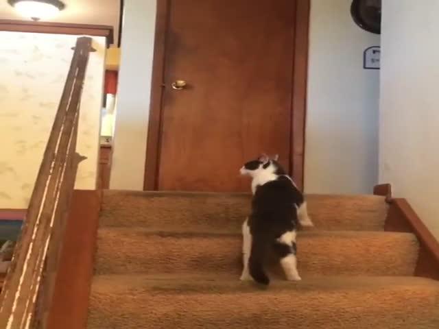 Собаке не стоило связываться с котом
