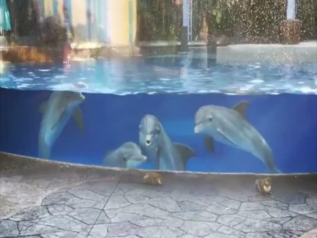 Дельфины впервые увидели белок