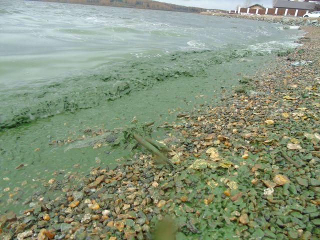 Черноисточинское водохранилище под Нижним Тагилом стало зеленым (7 фото)