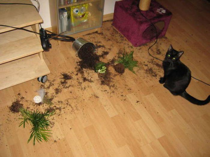 Выходки домашних животных (38 фото)