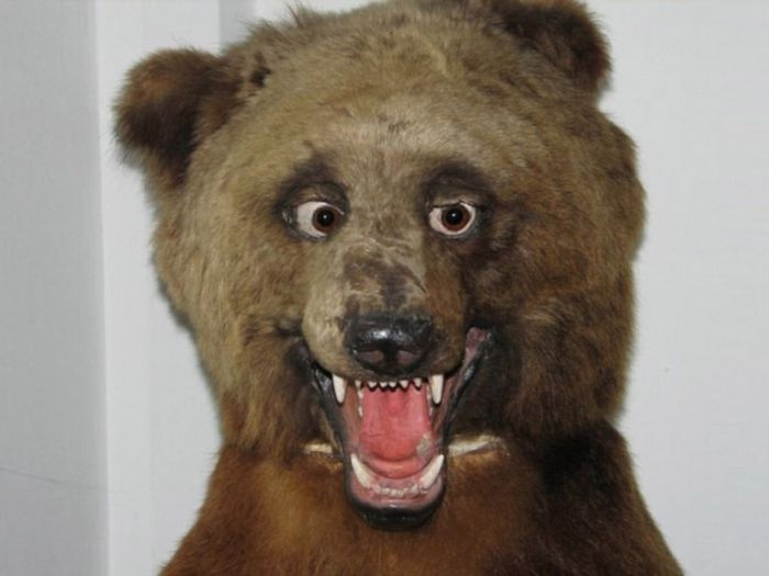 taxidermy_01.jpg