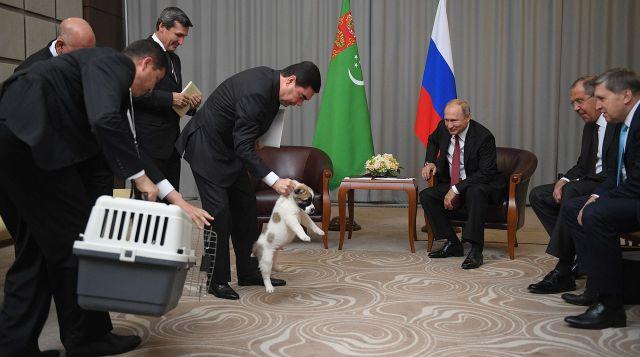 Президент Туркмении Гурбангулы Бердымухамедов подарил Путину щенка алабая по кличке Верный (5 фото + видео)