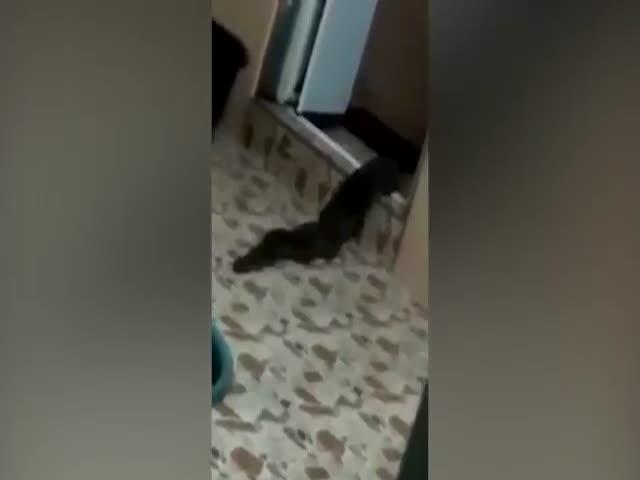 Житель Малайзии обнаружил в своем доме таинственное существо