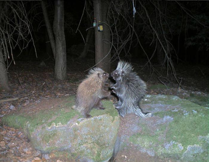 Любопытные фото лесных обитателей (39 фото)