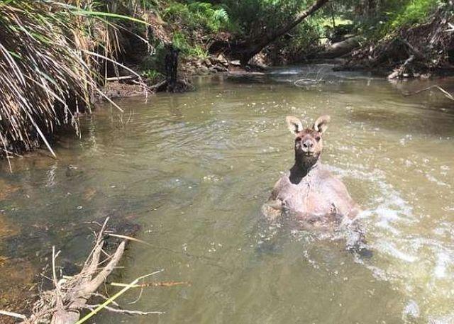 Фотографу удалось снять мускулистого кенгуру (5 фото)