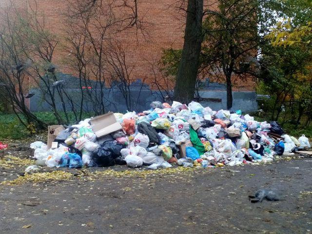 Подмосковное Пушкино утопает в мусоре (15 фото)