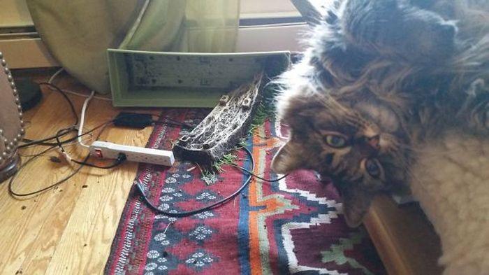 Домашние животные проказничают (31 фото)
