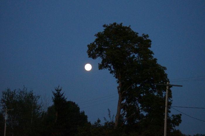 Деревья необычной формы (26 фото)