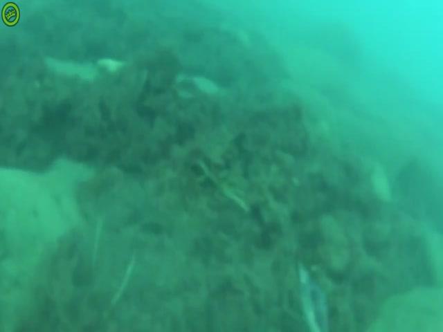 Подводная встреча