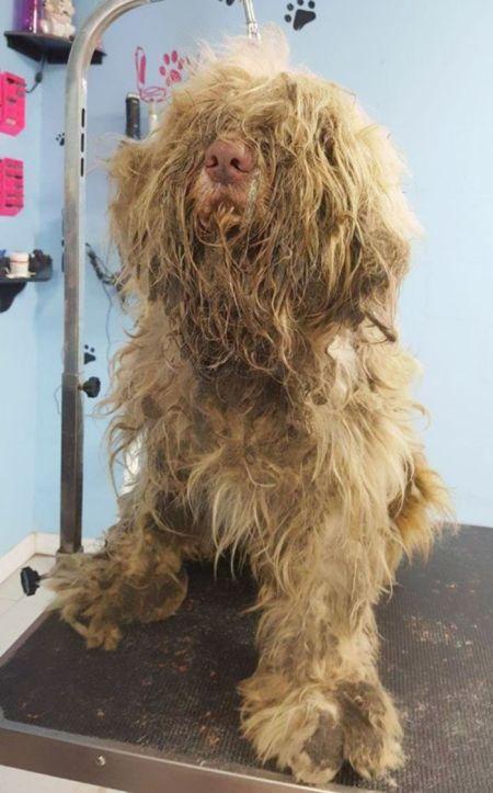 Псу, найденному на улице, вернули нормальный вид (8 фото)