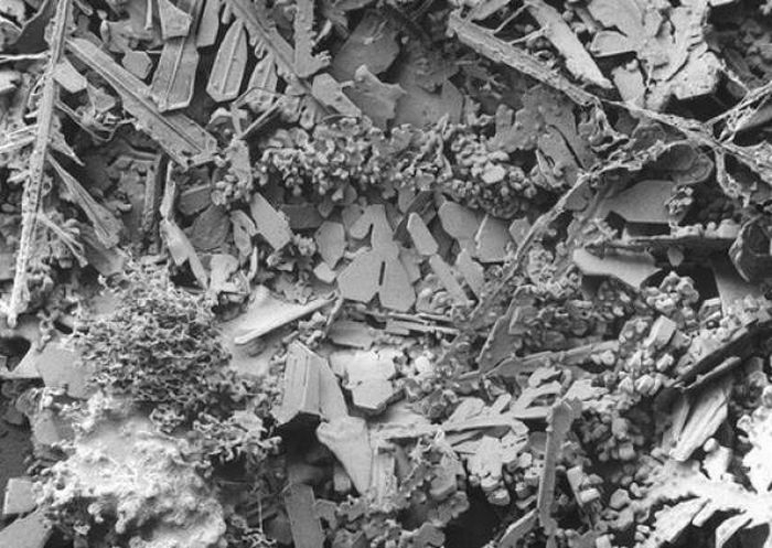 Мир под микроскопом (18 фото)