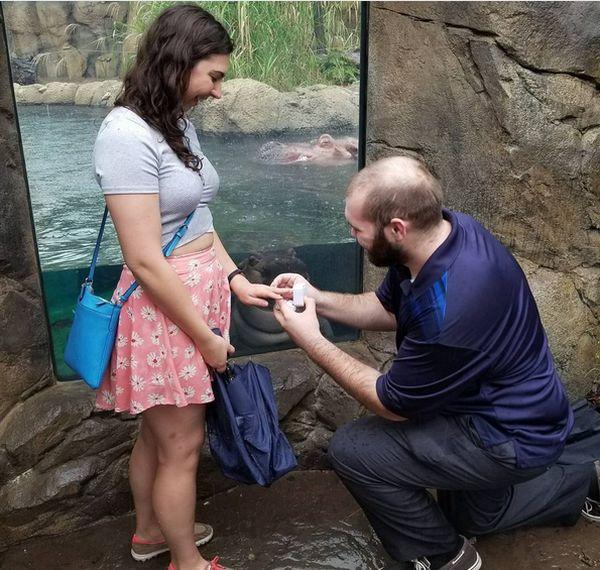 Любопытный бегемотик стал героем фотографии с помолвкой американской пары (4 фото)