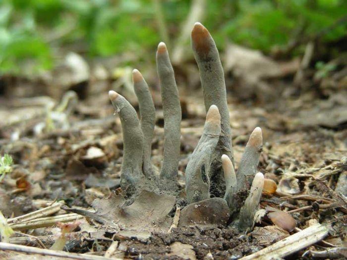 Кошмарные растения. Вот это жуть!
