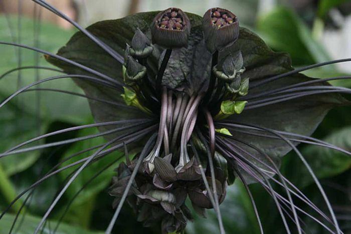Жуткие растения (18 фото)