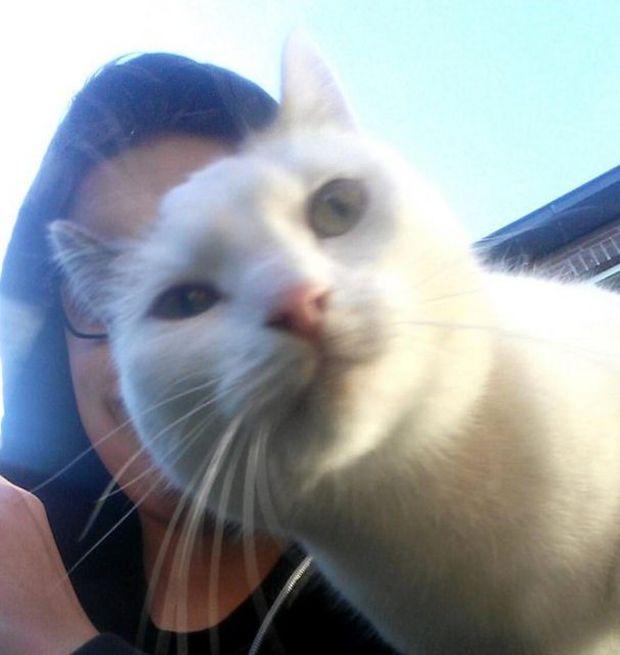 Селфи, нагло испорченные котами (11 фото)