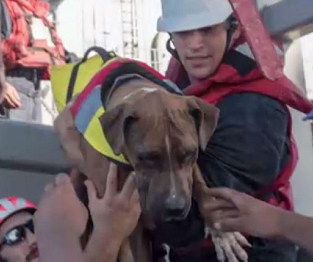 Моряки ВМС США спасали двух американок, дрейфовавших 5 месяцев в тихом океане (3 фото + видео)