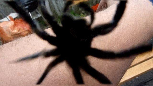 А вы до сих пор не боитесь пауков? (15 гифок)