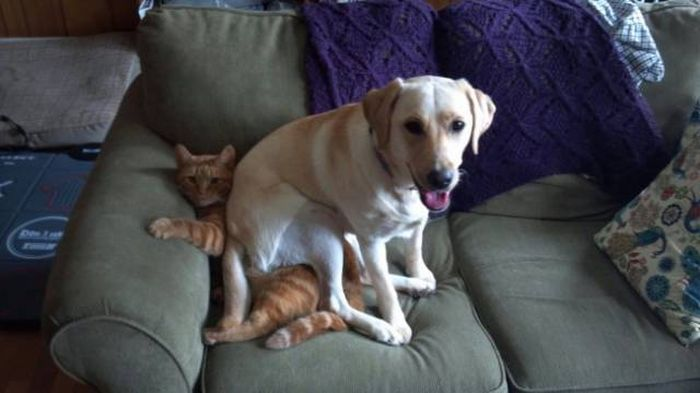 Забавные фото с кошками и собаками (19 фото)