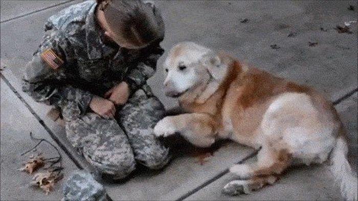 Собаки приветствуют своих хозяев-военнослужащих (15 гифок)