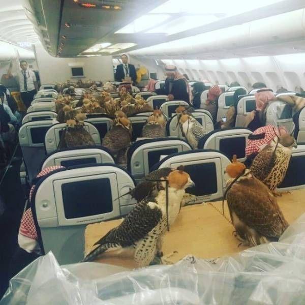 Странные снимки из самолетов (20 фото)
