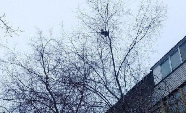Жители Омска скинулись на автовышку ради спасения застрявшего на дереве кота (4 фото)