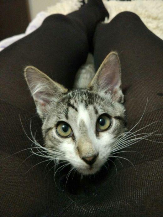 Котенок знает толк в выборе уютного местечка (2 фото)