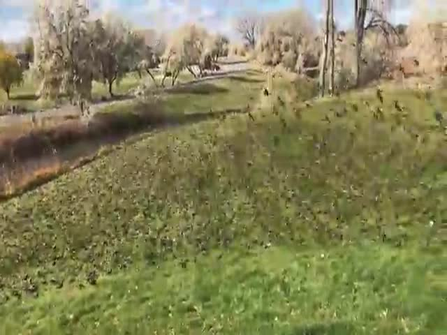 Взлетевшие с поля птицы помогли снять эффектное видео