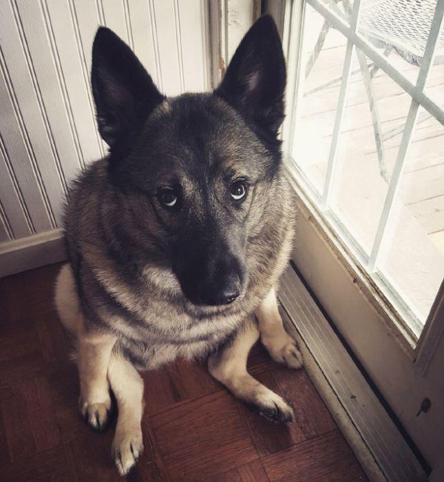 Забавные фото собак (18 фото)