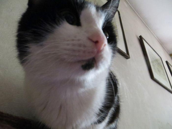 Коты пытаются разблокировать ноутбуки (16 фото)