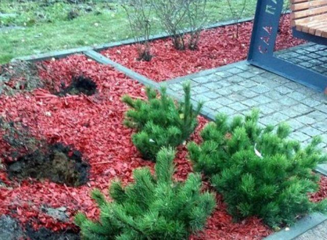 В Санкт-Петербурге украдены ели с мемориала памяти жертвам авиакатастрофы над Синаем (фото)