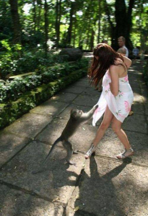 Животные пытаются раздеть девушек (15 фото)